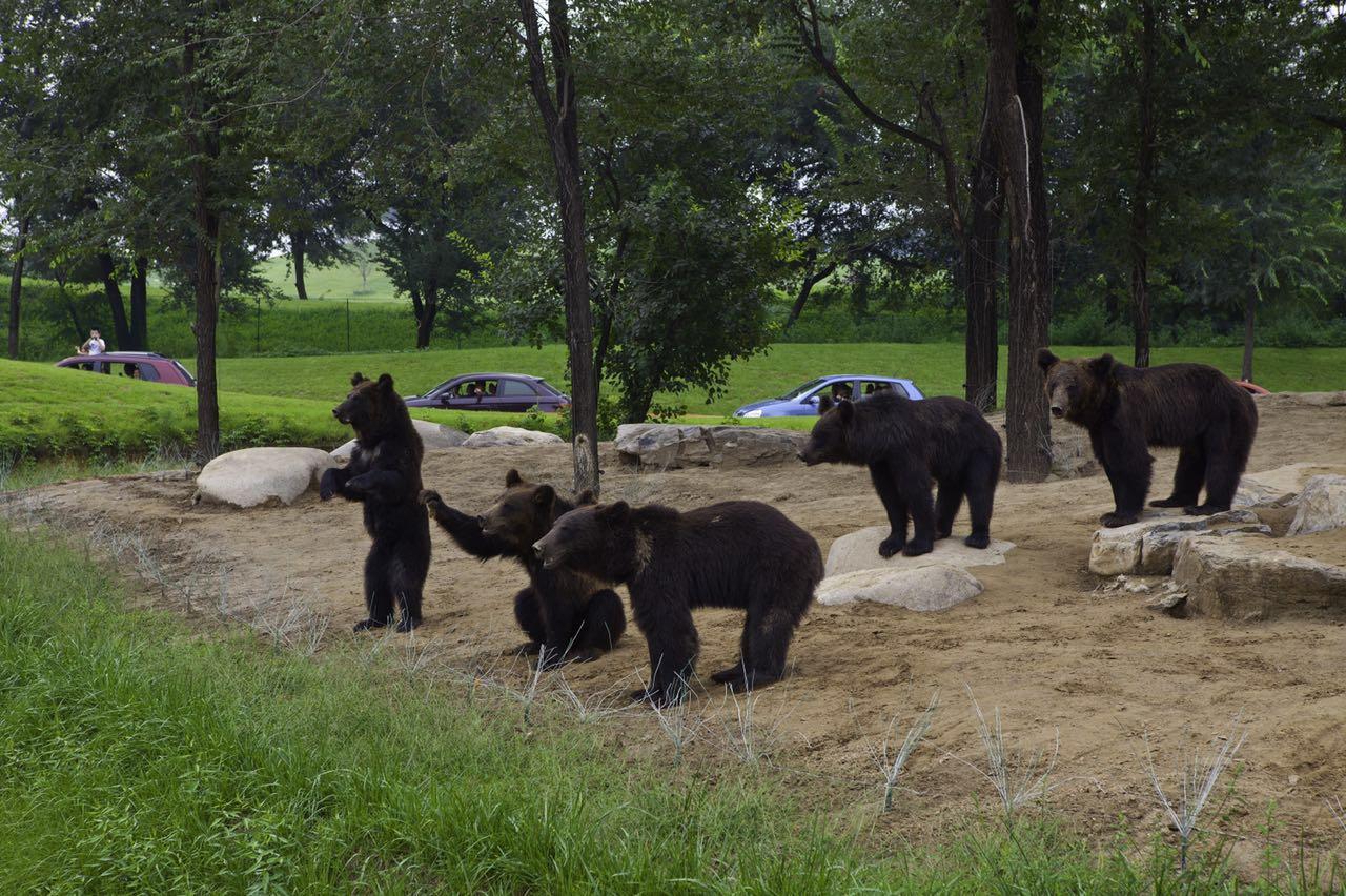 大兴区北京野生动物园